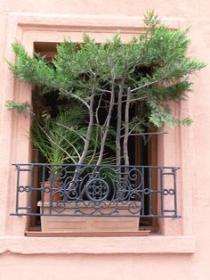 Jardinière avec plusieurs conifères sur un rebord de fenêtre, rue du Château, Paris 14e (75)