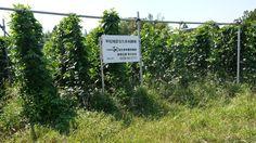 なたまめ普及会: 平松地区の圃場へ