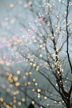sweetinspiration2014:  Sparkling lights