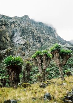 Uganda, Pohoří Ruwenzori, Trek