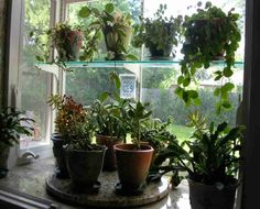 Garden Kitchen Window.  Plus Lazy Susan is an excellent idea for rotating plants.