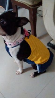 Vestido canino
