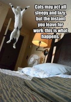 Funny Pictures Of The Day – 93 Pics I can believe it, especially as far as my cat Molly is concerned hahahaha