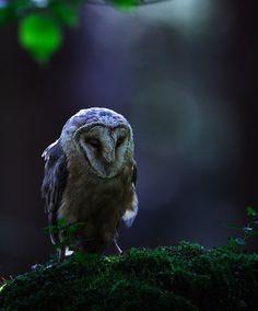 """megarah-moon: """" """"The Barn Owl"""" by Jiří Míchal """""""