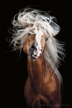 Horses can be one of the hardest subjects to photograph, but Wiebke Haas | animal photography manages to capture their wild beauty in elegant portraits.