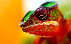 Chameleon - Animal Makeup