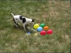 funny dog and cat 2015 - YouTube