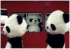 panda memes   Tumblr