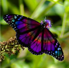 Pretty butterflies! Have I told you how much I love butterflies?