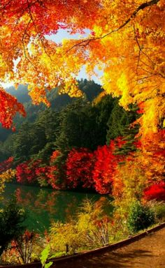 Awesome Autumn Photo