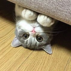 hola!!