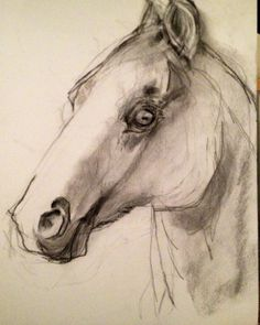 Charcoal horse head study on Etsy, $35.00