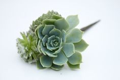 Succulent Hair Pin by Eucca on Etsy, $15.00