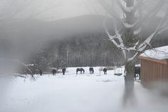 Vermont Christmas through a window pane Winter Christmas, Vintage Christmas, Holiday, Window Panes, Shabby Vintage, Tis The Season, Vermont, Invitations, Outdoor