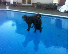 Dogs Discover The Different Properties Of Water! http://techmash.co.uk/2014/01/29/dogs-discover-the-different-properties-of-water/