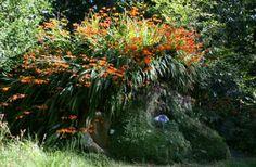 Gardens in Cornwall, Lost Gardens of Heligan, Pentewan, St Austell c Julian Stephens