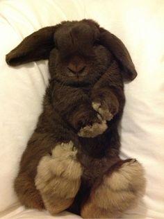 Big Bunny has furry feet.