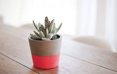 I SPY IDEA | Succulents | I SPY DIY