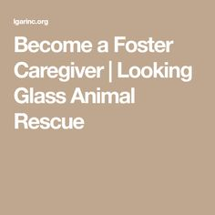 Become a Foster Caregiver | Looking Glass Animal Rescue