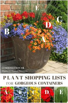 List for Gorgeous Patio Planters Grab this plant list to create this beautiful patio container with plants by Proven Winners.Grab this plant list to create this beautiful patio container with plants by Proven Winners. Container Flowers, Container Plants, Succulent Containers, Gemüseanbau In Kübeln, Patio Planters, Plants For Planters, Flowers In Planters, Ideas For Planters, Patio Ideas