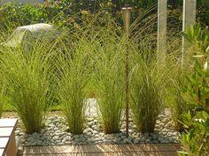 Jörg Kaspari - Landschaftsarchitekt - Gräserhecke zur lockeren Begrenzung des Holzdeckes #Miscanthus #Gräser #Gräserhecke #ornamental #grasses #Deck