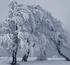 ice storm |Pinned from PinTo for iPad|