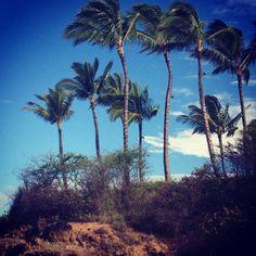 I miss Maui
