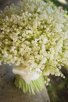 Lily of the Valley flower | Passipoularidou's Weblog