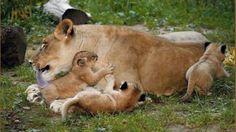 Proponen que el zoológico de la Ciudad deje de tener animales | Minutouno.com