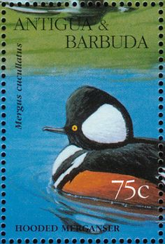 Hooded Merganser stamps - mainly images - gallery format