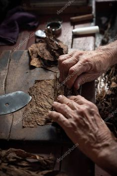 Cigar rolling or making by torcedor in cuba - Stock Photo , Cuba Stock, Zigarren Lounges, Cigars, Rolls, Homemade, Stock Photos, Home Made, Buns, Cigar