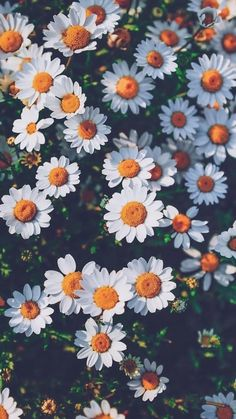 Margaritas (Flores) Whenever we approached the Flores & Prats company, we needed to target on Tumblr Backgrounds, Tumblr Wallpaper, Flower Backgrounds, Aesthetic Backgrounds, Aesthetic Iphone Wallpaper, Nature Wallpaper, Wallpaper Backgrounds, Aesthetic Wallpapers, Screen Wallpaper
