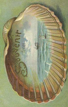 souvenir card--sea shell--Vintage Fangirl
