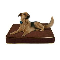 Luxury Memory Foam Dog Bed With Fleece Cover Size Medium Check This Awesome Product By Going To The Link At Image