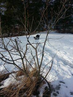 busk og to linseluser Bald Eagle, Snow, Bird, Animals, Outdoor, Nature, Animais, Outdoors, Animales