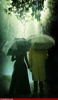 People With Umbrellas in a Rain Forest / photoshop contest entry by Albitar