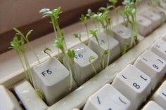 Image de plants, grunge, and green Plant Aesthetic, Purple Aesthetic, Aesthetic Photo, Aesthetic Pictures, Aesthetic Grunge, Lavender Aesthetic, Spring Aesthetic, Nature Aesthetic, Soft Grunge