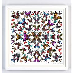 Inis Butterfly Art Print - colourful art Available online at everythingbegins.com