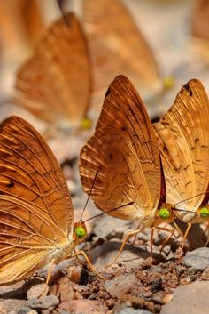 *~*WELCOME To The Wonderful World of Nature *~* For all who love the wonders of our world. Flying Flowers, Butterfly Kisses, Butterfly Photos, Butterfly Crafts, Butterfly Flowers, Caramel Color, Caramel Brown, Chenille, Color Splash