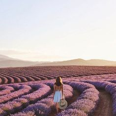 Now this is a field we wouldn't mind getting lost in. 📷: @kisforkani via #letsgoeverywhere