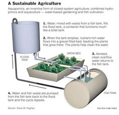 Aquaponics, a Gardening System Using Fish and Circulating Water - NYTimes.com