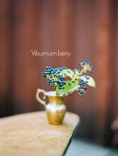 Viburnum - American Cranberry bush (Viburnum Trilobum) - leaves turn yellow and red in the fall. Zones 2-7
