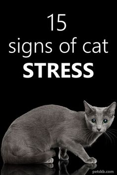 15 Signs of Cat Stress - Just like us, cats can suffer from stress which can cause them severe internal turmoil. As owners, we should learn to recognize the signs and then alleviate the underlying cause, especially if the it is a health problem or injury Cat Care Tips, Dog Care, Cat Info, Kitten Care, Cat Playground, Cat Behavior, Cat Facts, Cat Health, I Love Cats