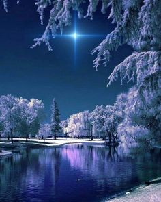 Crunchy winter night – Miracles from Nature Winter Pictures, Nature Pictures, Cool Pictures, Beautiful Pictures, Winter Szenen, Winter Magic, Winter Sunset, Winter Christmas, Christmas Tree
