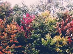 Pretty, pretty pictures of fall colors by Sara Kristen at arterie & co.