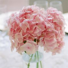 Light Pink Hydrangea. This would be a good flower to mix in for texture