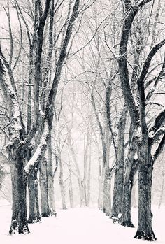 i love winter trees I'm Snow Storm, Philipp Klinger Winter Szenen, I Love Winter, Winter Magic, Winter Christmas, Winter Trees, Snowy Trees, Winter Walk, Winter Picture, Winter Night