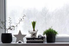 🛣 Filip má názor na vánoční výzdobu zřejmě zcela jiný... 🤔 _________________________________ #hyacint #hyacinths #dekorace… Plants, Instagram, Plant, Planets