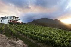 This has to be one of my favourite wine farms in #Hermanus @LaViergeWines