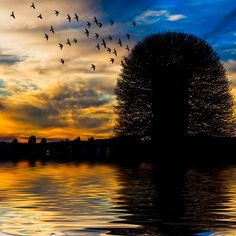 I see so much life and strength in the single tree standing. The birds flying in the sky and the water reflecting the colors in the sky are beautiful as well.